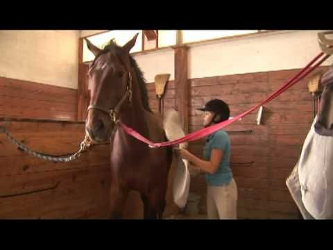 "Horse Care & Buying Tips : How to Break a Horse (I hate hearing the term ""breaking a horse"")."