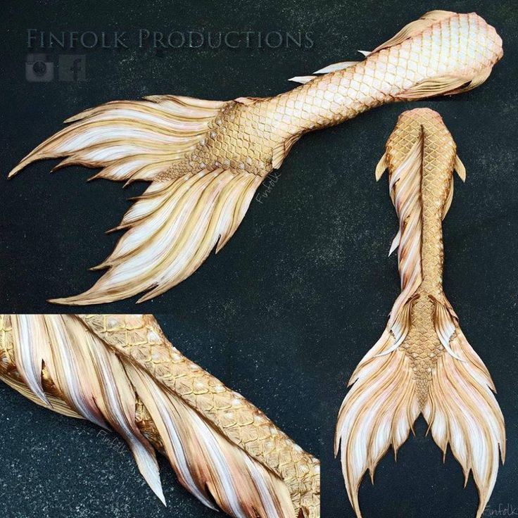 One of the most incredible golden tails ever! #finfolk #finfolkproductions…