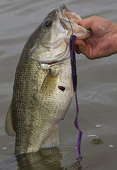 Five Must Have Lures For Bass Fishing - Rubber Worm
