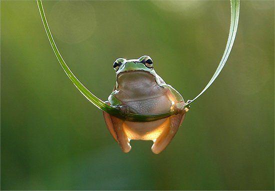 pin von nicorteil f auf frog  frösche amphibien frosch