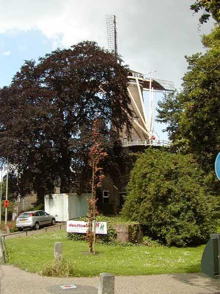 17th Century Wind Mill in Gouda