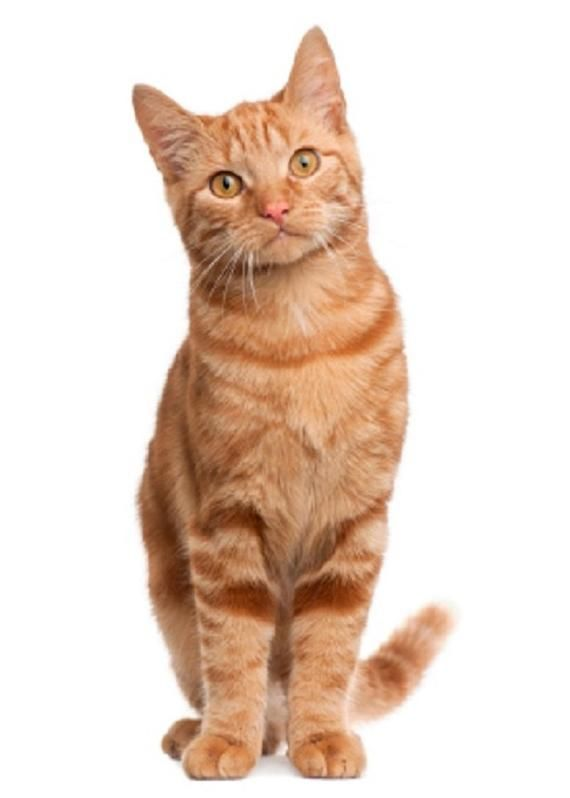 Cat Tabby Cat Quilt Set Red Orange One Cat Standing On Etsy Tabby Cat Cat Stands Cat Behavior