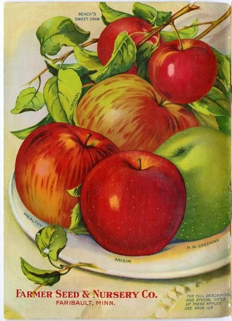 These stunning apples appear inside the front cover of the 1914 Farmer Seed & Nursery catalog.  They had also appeared on the back cover of the previous year's catalog, so they must have been effective in selling apple trees!   Farmer Seed & Nursery originated in Faribault, MN in 1888. Andersen Horticultural Library hosts a collection of vintage Farmer Seed & Nursery catalogs.
