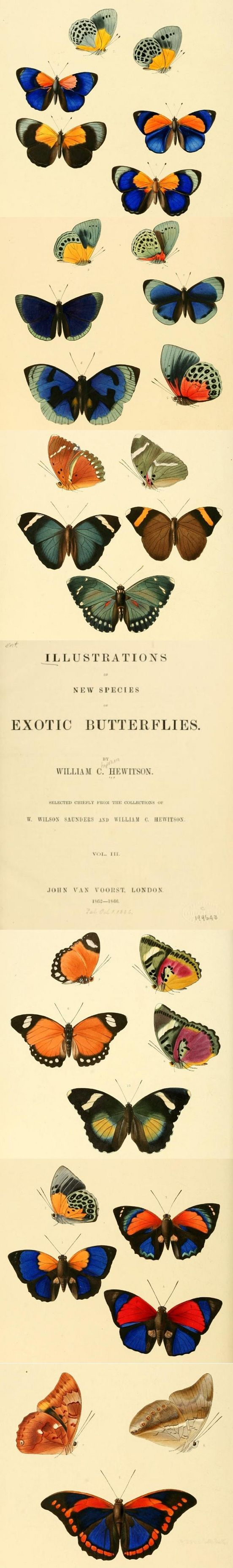 Click to read this #butterfly book from 1856. These #butterflies are great inspiration for #woodworking, #craft, #art and many other #DIY projects!
