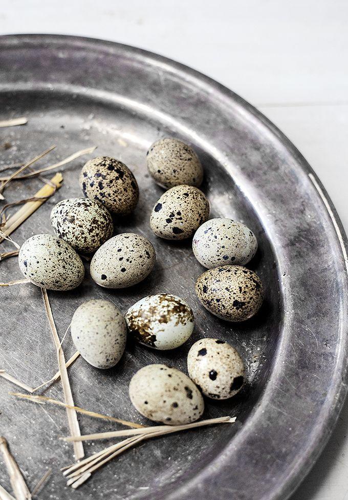 ♅ Dove Gray Home Decor ♅ egg tableau