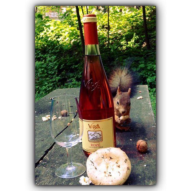 #rosebor #vargaborinsta #mókus #Mátra @vargapinceszet #gomba#mushroom #autumn