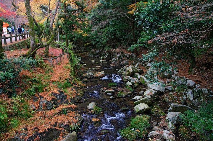 The Momiji-gari: Red Leaf Hunting in Kyoto | http://travelingdesh.com/the-momiji-gari-red-leaf-hunting-in-kyoto/