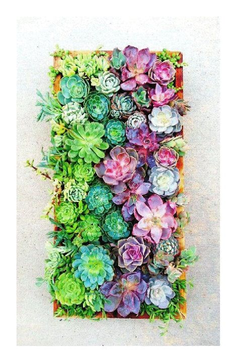 We simply must have succulents in the garden, I adore them
