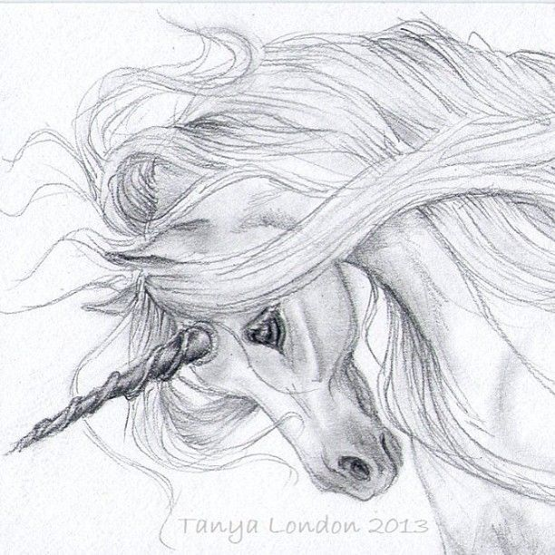 Realistic Unicorn Drawings Unicorn Drawing In Pencil Gray Unicorn