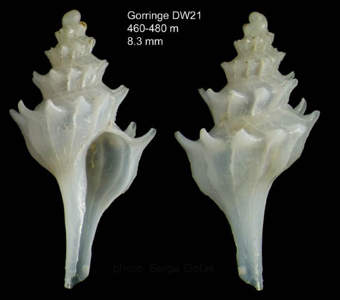 shellShells, Specimen