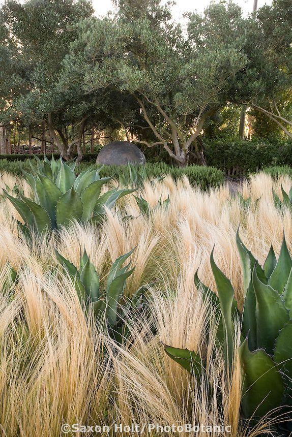 Contrastes. Jardín de demostración de Oehme Van Sweden con plantas tolerantes a la sequía,  Cornerstone.