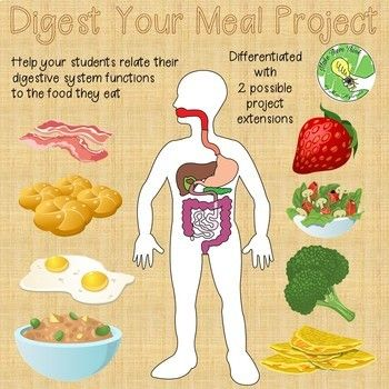 The purpose of this project is to make connections between the nutrients in foods we eat and the roles of the various organs of the digestive system. To complete this project, students will need a poster board, markers or colored pencils, access to nutrient labels (printed out by a teacher