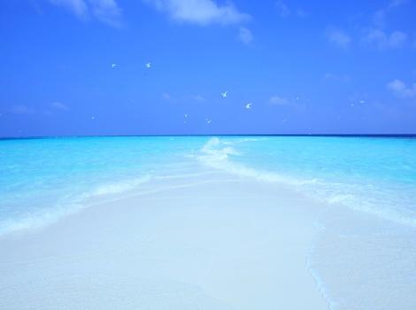 砂浜と海鳥、モルディブ