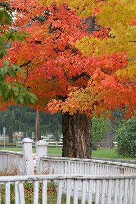 Wonderful Life Farm: Autumn Scenes in New England