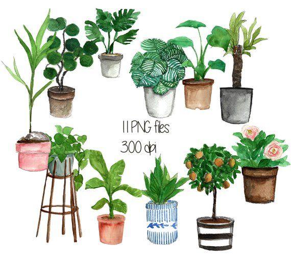 Indoor Plant Pot Cliparts Watercolor Clipart Plant Clipart Potted Plants Instant Download Plant Illustration Png Clipart Indoor Plant Pots Plant Illustration Plants