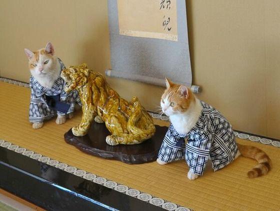 【大発見】 猫に浴衣を着せると可愛い (画像あり)wwwwwwwwwwwwwwwwwwwwww