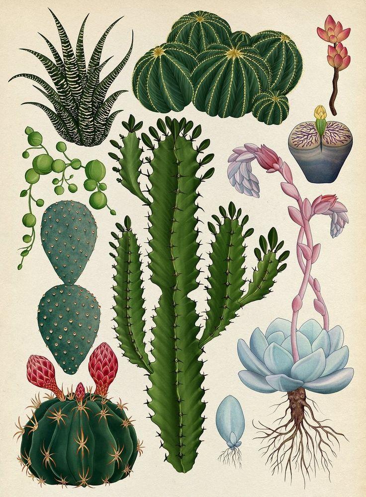 Botanicum. Viaje a través de la botánica con ilustraciones de Katie Scott | El Blog de La Tabla