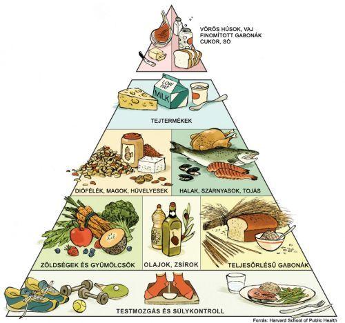 Új táplálkozási piramis - Reforma