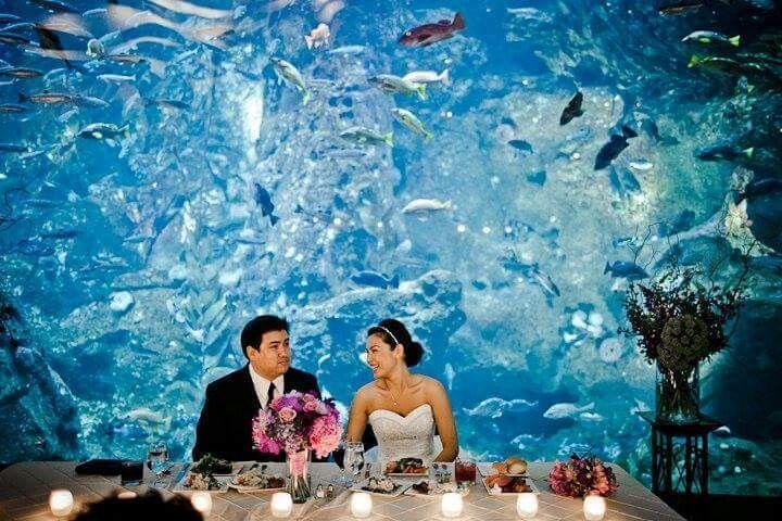 Beautiful Aquarium Wedding Background Wedding Dreams