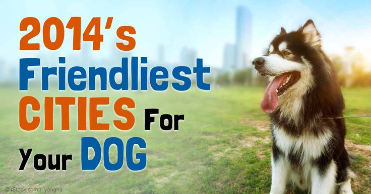 Here are the most dog-friendly cities in 2014 as listed by Dog Fancy magazine. http://healthypets.mercola.com/sites/healthypets/archive/2014/12/26/2014-dog-friendly-cities.aspx