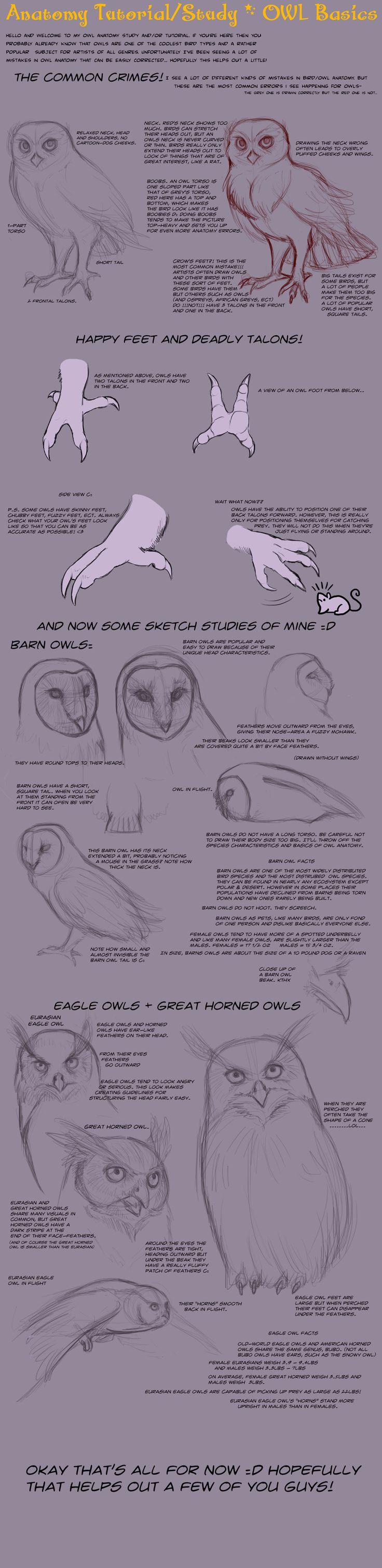 Anatomy Tutorial: Owl Basics by *AddictionHalfWay on deviantART ✤ || CHARACTER DESIGN REFERENCES |
