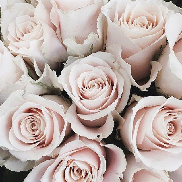 Happy #Weddingwednesday ❤️💜💛 Guten Morgen ihr Lieben 💗 Heute steht für Ines & mich Uni an! 📚 da das Wetter nicht so toll ist, ist das aber erträglich ☁️😁 habt einen wunderschönen Mittwoch ⭐️ #repost @jessljia #beautiful #roses #today #wednesday #coffee #goodmorning #flowers #wedding #bride #hochzeit2016 #bridetobe #instabräute #instadaily #instagood #hochzeitsfotograf #instagram #follow #inspiration #humpday #philosophylove #freietrauung #hochzeitsredner #duesseldorf #nrw