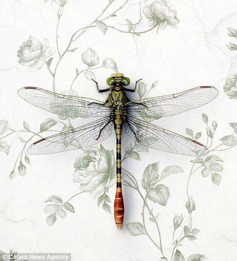 (this is a painting, NOT a photo) Kramer's painting of a dragonfly on an intricate background