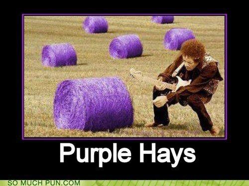 google.com: Kiss, Jimi Hendrix, Funnies Things, Purplehay, Jimihendrix, Things Purple, Purple Haze, Funnies Stuff, Purple Hay