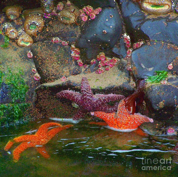 1000 Images About Tide Pool Life On Pinterest South