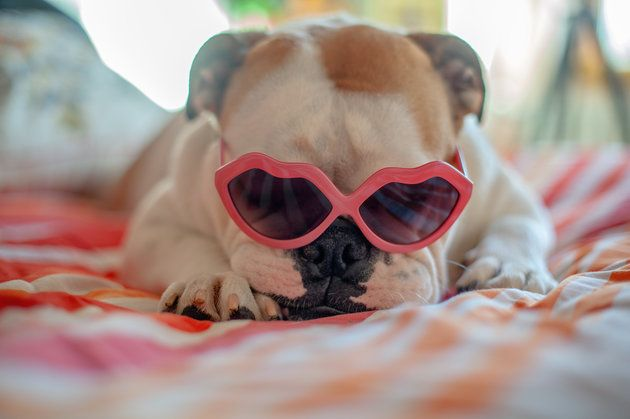Struggling To Sleep? Wear Your Shades Before Bed, Researcher Suggests | Huffington Post