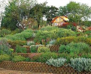 Slope garden design ideas for hill slope pinterest for Garden designs for slopes