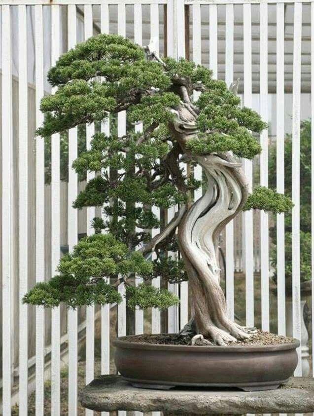 Pin By Bagus Wijaya On Bonsai Insp2 Bonsai Tree Bonsai Tree Types