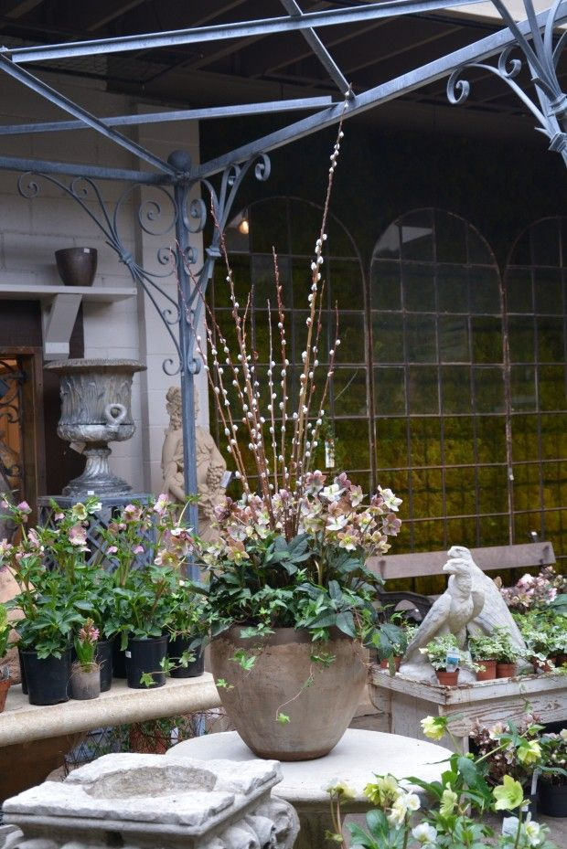 37 Best Images About Winter Spring Pots On Pinterest