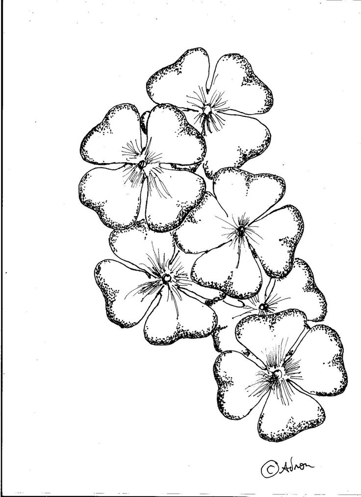 Four Leaf Clover Drawing 10 Best Images About Shamrock