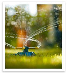 Water Your Lawn - http://www.buffaloturf.com.au.