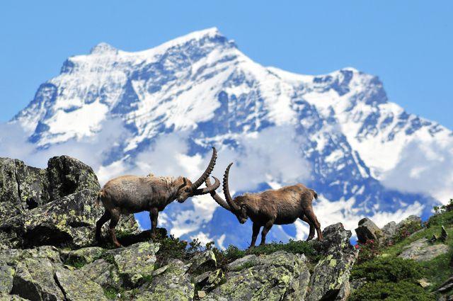"""Parco Nazionale Gran Paradiso d'Inverno, Escursioni con le """"Guide del Parco"""""""