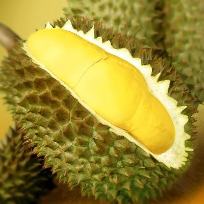 Image result for free bolg pics of the durian plant