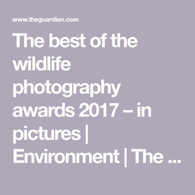The best of the wildlife photography awards 2017 – in pictures | Environment | The Guardian