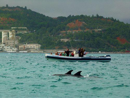 de delfines en el estuario del ro sado troia alentejo portugal