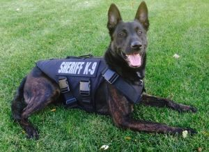 """OAKLAND COUNTY, MI – Nationwide Groupon Campaign raises over $335,000 for law enforcement K9 protective vests. The Oakland County Sheriff's Office K9 Unit will be receiving two ballistic vests for K9s Blitz and Nuke thanks to a nationwide GROUPON EVENT that has raised over $335,000.00. The """"Occasions """" campaign for Groupon Grassroots to outfit police …"""
