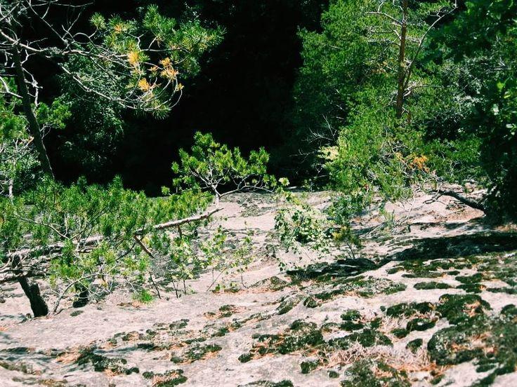 #79 woods