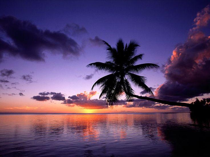 coucher de soleil palmier                                                                                                                                                                                 Plus
