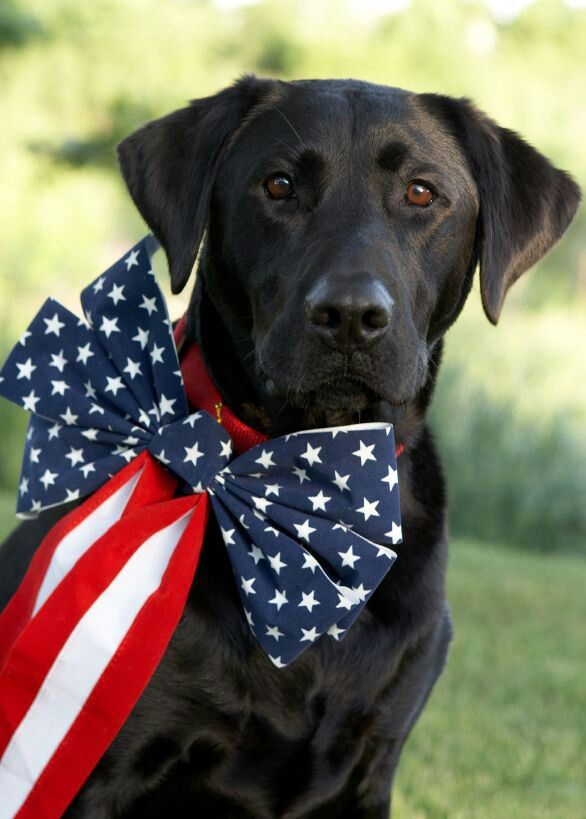 Best Dog Food For Labs >> 30 best Kids Celebrate America images on Pinterest | Red white blue, Bricolage and Holiday ideas