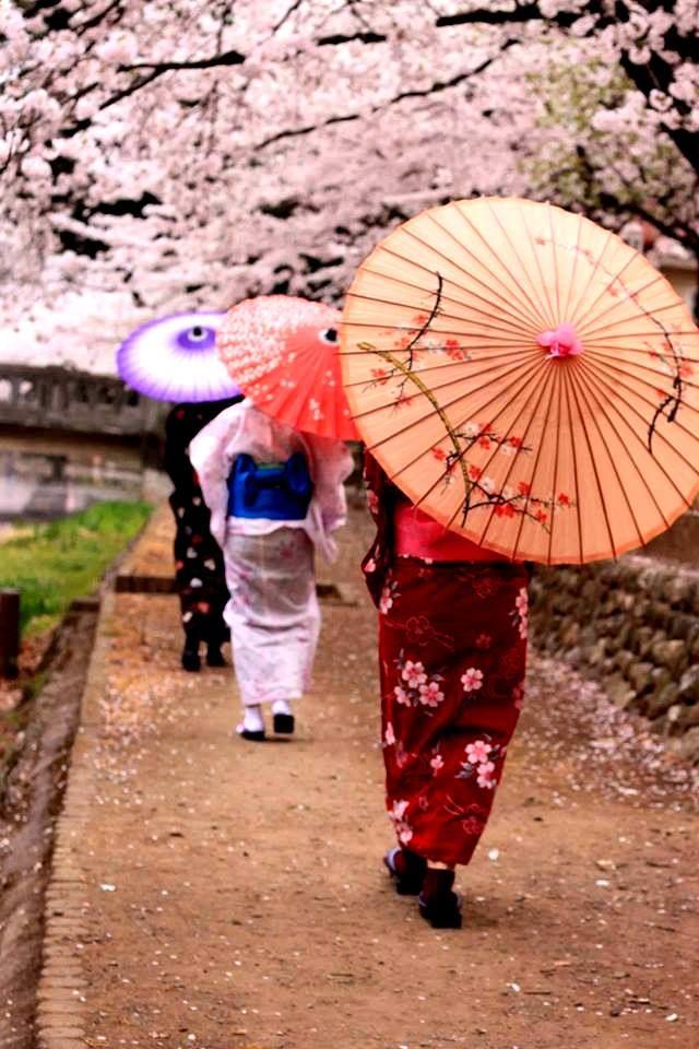 Japan Sakura Festival Japanese Umbrella Hanami Japanese Art