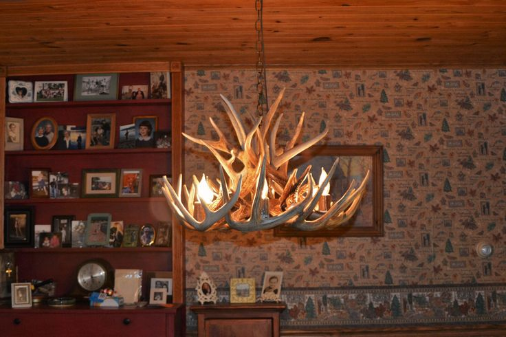 Brand New 26 inch Whitetail Deer Shed Antler Chandelier with center Down Light, by NorthwoodsAntler on Etsy https://www.etsy.com/listing/205539703/brand-new-26-inch-whitetail-deer-shed
