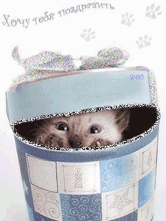 Хочу тебя поздравить)))Кошка,кот,новый год - анимация на телефон №954609