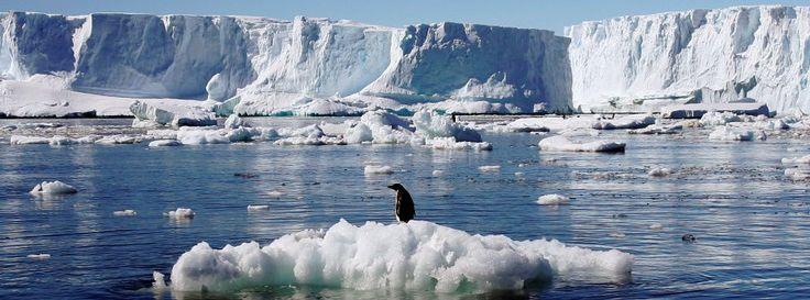 Offizieller Beschluss: Vor Antarktis entsteht größte Meeresschutzzone der Welt
