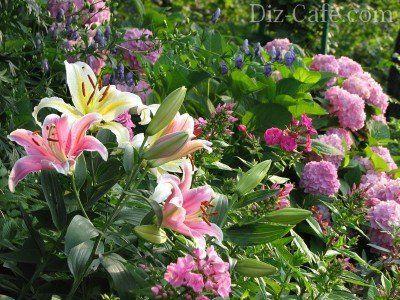 Лилии с гортензиями и флоксами