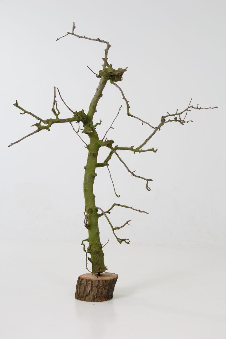 Wensboompje, verkrijgbaar in wit en naturel. www.decoratietakken.nl