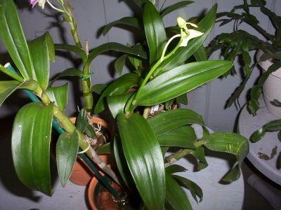 Come Prendersi Cura delle Orchidee -- via it.wikiHow.com